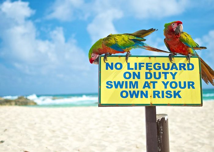 Parrots Greeting Card featuring the photograph No Lifeguard by Tammy Richardson