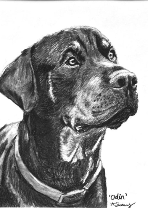 Rottweiler Greeting Card featuring the drawing Noble Rottweiler Sketch by Kate Sumners