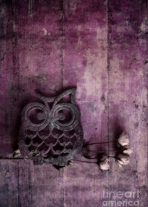 Rose Greeting Card featuring the photograph Nocturnal In Pink by Priska Wettstein