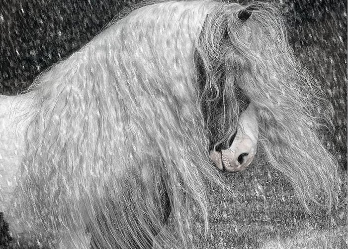 Gypsy Horses Greeting Card featuring the digital art Nor Easter by Fran J Scott
