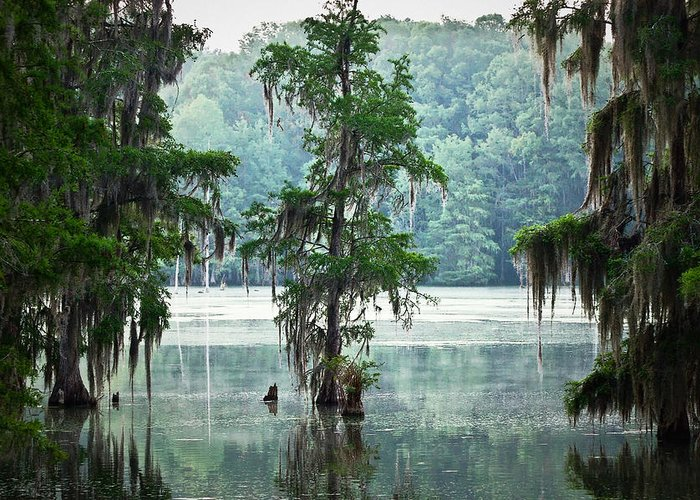 Swamp Greeting Card featuring the photograph North Florida Cypress Swamp by Rich Leighton