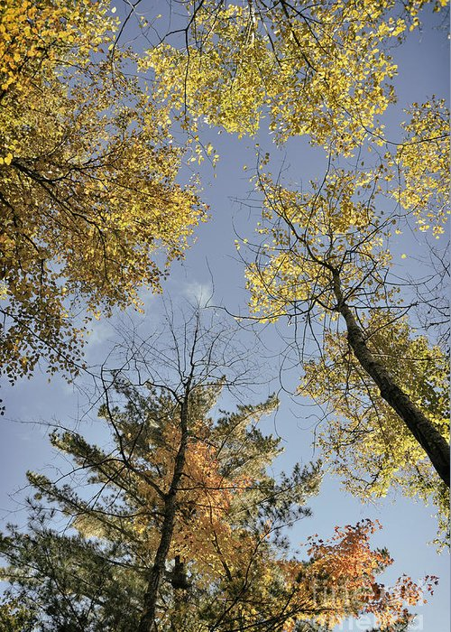 Wet Greeting Card featuring the photograph North Woods In The Fall by Birgit Tyrrell