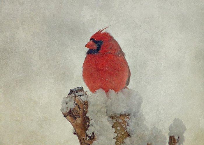 Cardinal Greeting Card featuring the photograph Northern Cardinal by Sandy Keeton