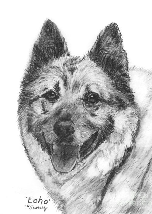 Norwegian Elkhound Greeting Card featuring the drawing Norwegian Elkhound Sketch by Kate Sumners