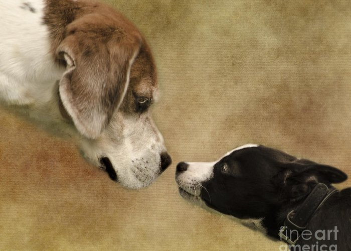 Dog Greeting Card featuring the photograph Nose To Nose Dogs by Linsey Williams