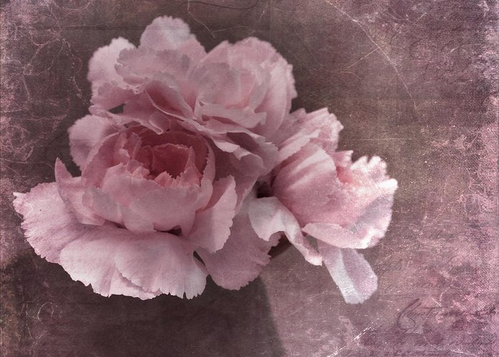 Carnation Greeting Card featuring the photograph Nostalgia by Priska Wettstein