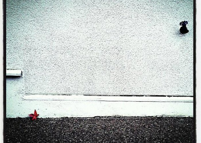 Minimalism Greeting Card featuring the photograph Not Lonely by CML Brown