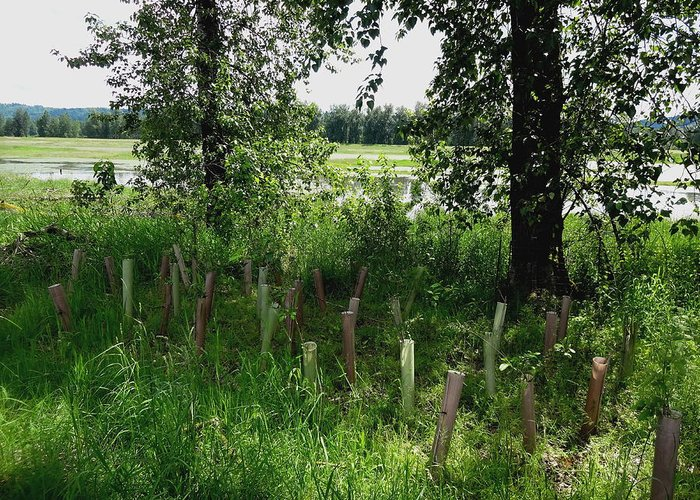 Steigerwald National Wildlife Refuge Greeting Card featuring the photograph Nurturing Trees To Grow by Lizbeth Bostrom
