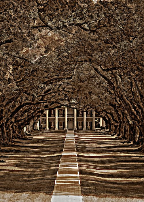Oak Alley Plantation Greeting Card featuring the photograph Oak Alley Bw by Steve Harrington