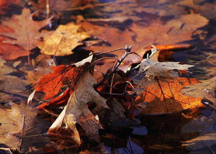 Nature Greeting Card featuring the photograph Oak Leaves by Jim Vance