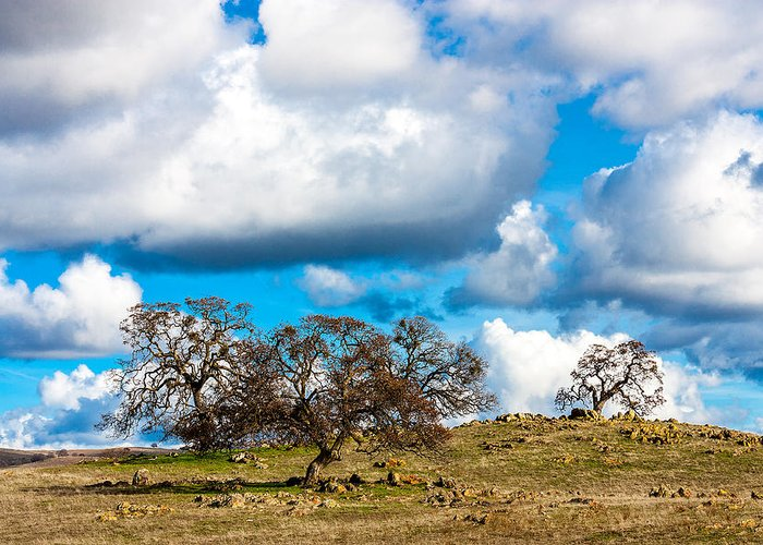 Oak Greeting Card featuring the photograph Oaks And Clouds by John Crowe