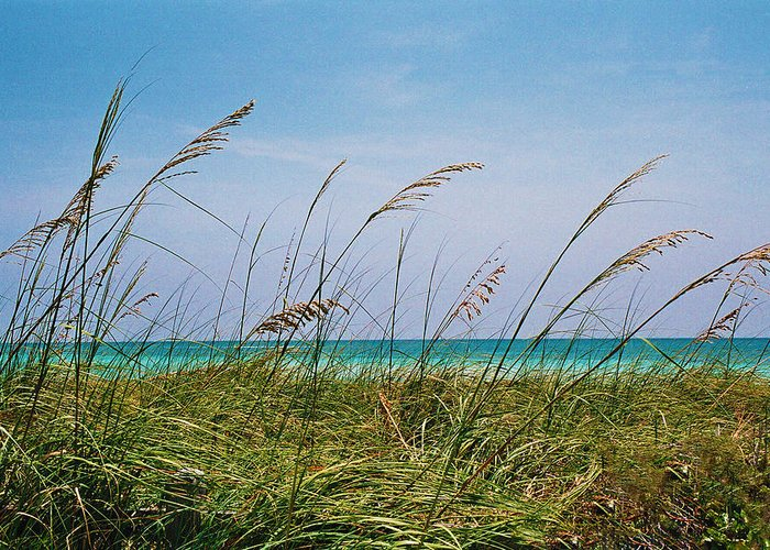 Ocean Greeting Card featuring the photograph Ocean Breezes by Stephie Carr