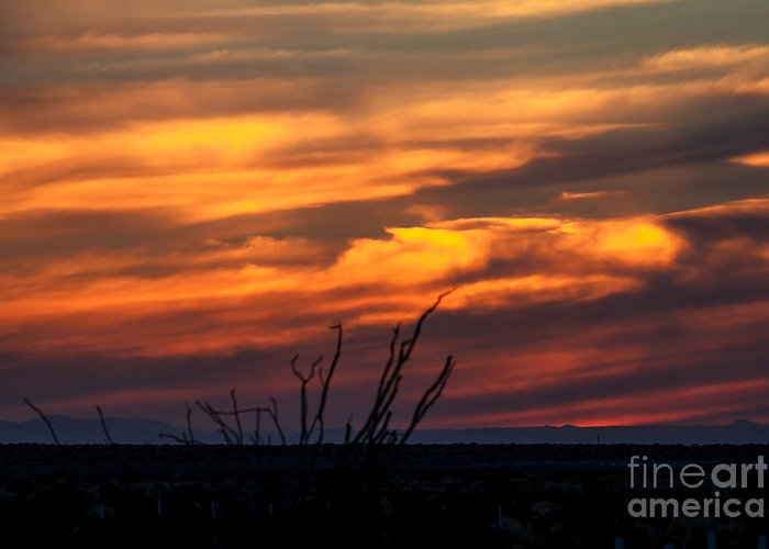 Sunrise Greeting Card featuring the photograph Ocotillo Sunset by Robert Bales