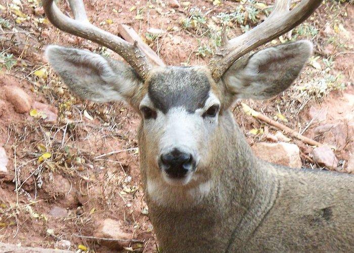 Deer Greeting Card featuring the photograph October Deer by Lanita Williams