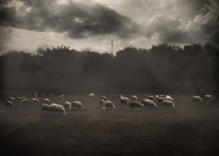 Field Greeting Card featuring the photograph October Insight by Taylan Apukovska
