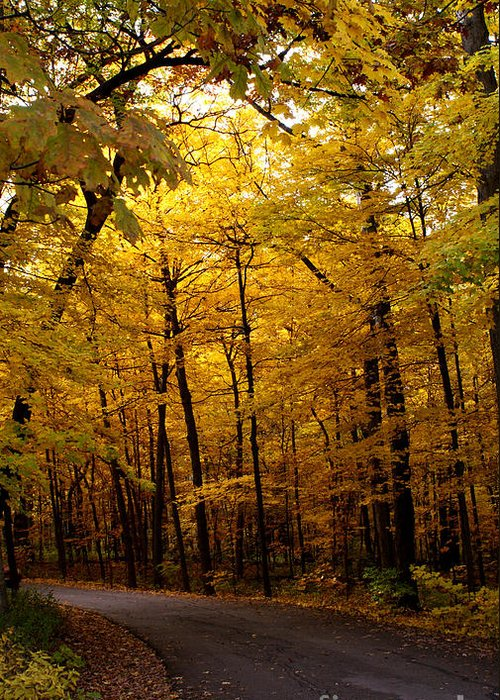 Leaves Greeting Card featuring the photograph October Road by Valerie Fuqua