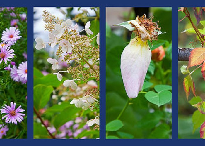 Garden Greeting Card featuring the photograph October by Theresa Tahara