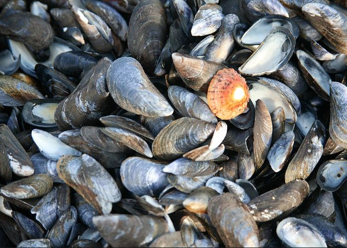 Shells Greeting Card featuring the photograph Odd Man Out by Christopher Rowlands