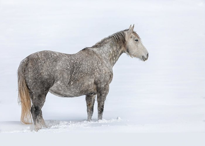 Horse Greeting Card featuring the photograph Off In The Distance by Gigi Embrechts