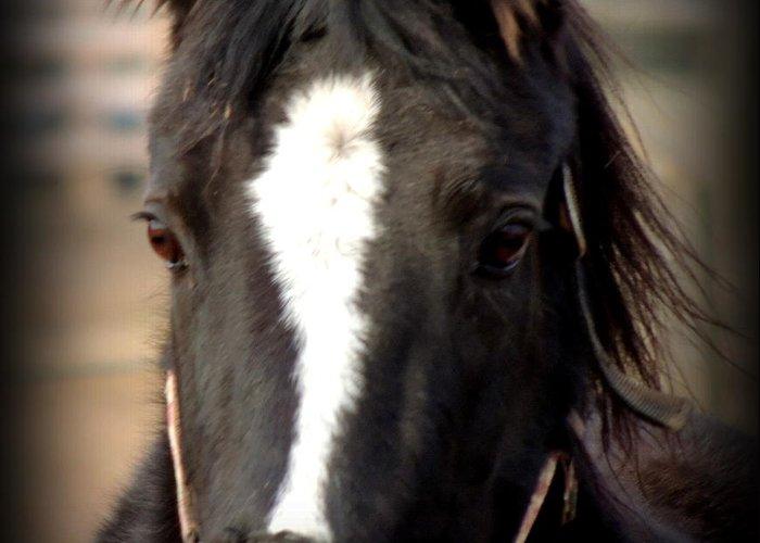 Horse Greeting Card featuring the photograph Oglala II by Rabiah Seminole
