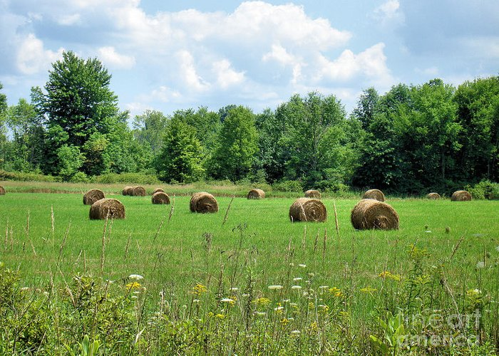 Ohio Greeting Card featuring the photograph Ohio Countryside by Cortney Price