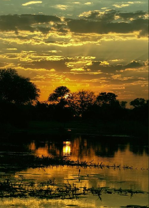 Okavango Swamp Greeting Card featuring the photograph Okavango Sunset by Amanda Stadther