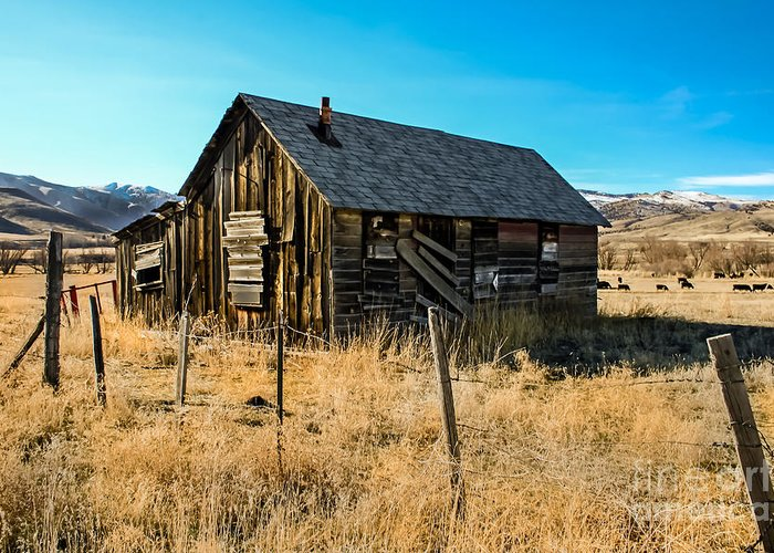 Barn Greeting Card featuring the photograph Old And Forgotten by Robert Bales