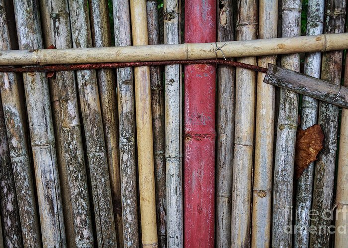 Brown Greeting Card featuring the photograph Old Bamboo Fence by Niphon Chanthana