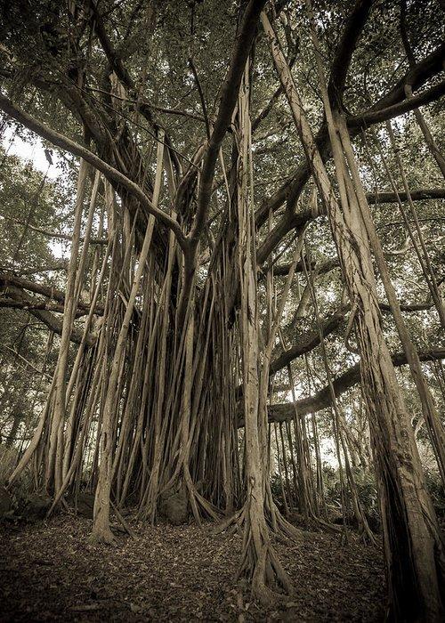 Banyan Tree Greeting Cards