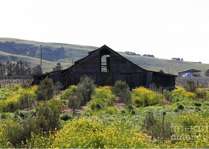 Sonoma Greeting Card featuring the photograph Old Barn In Sonoma California 5d22235 by Wingsdomain Art and Photography
