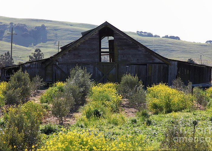 Sonoma Greeting Card featuring the photograph Old Barn In Sonoma California 5d22236 by Wingsdomain Art and Photography