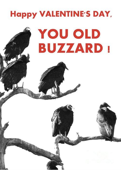 Buzzards Greeting Card featuring the photograph Old Buzzard Valentine by Joe Jake Pratt