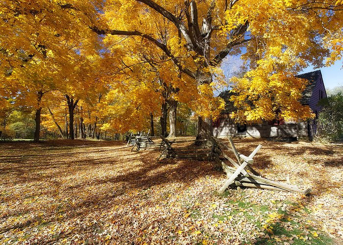 Daytime Greeting Card featuring the photograph Old Farmroad With Autumn Colors by George Oze