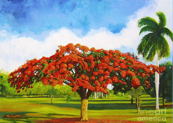 Cuba Art Greeting Card featuring the painting Old Flamboyan by Jose Manuel Abraham
