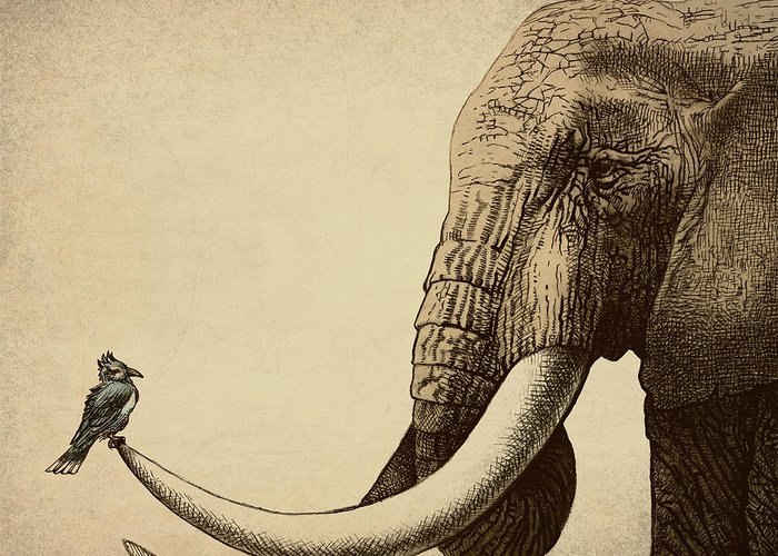 Elephant Greeting Card featuring the photograph Old Friend by Eric Fan