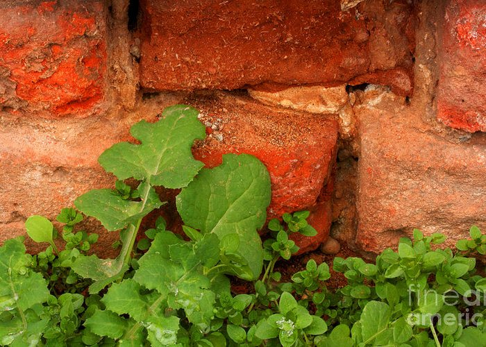 Old Red Wall Greeting Card featuring the photograph Old Red Wall by Jolanta Meskauskiene