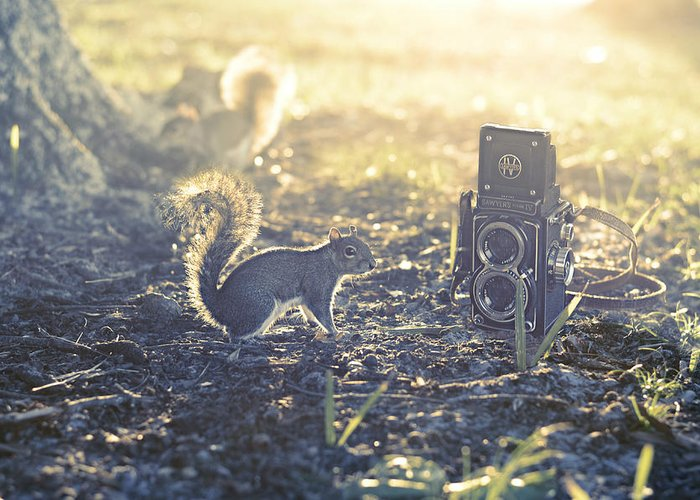 Er Squirrel Camera Nature Lover Vintage Park Humor Sunlit Sunlight Photo Art Funny Film Style Twin Lens Sawyer Mark Iv Laura Fasulo Laurarama Woodland Scene Fairy Tale Story Book Tree Grass Soil Glow Glowing Sun Light Sunny Spring Summer Summery Gift For Child Children Photographer Animal Lover Er Whimsy Whimsical Fluffy Tails Photo Art Somewhere Greeting Card featuring the photograph Old School by Laura Fasulo