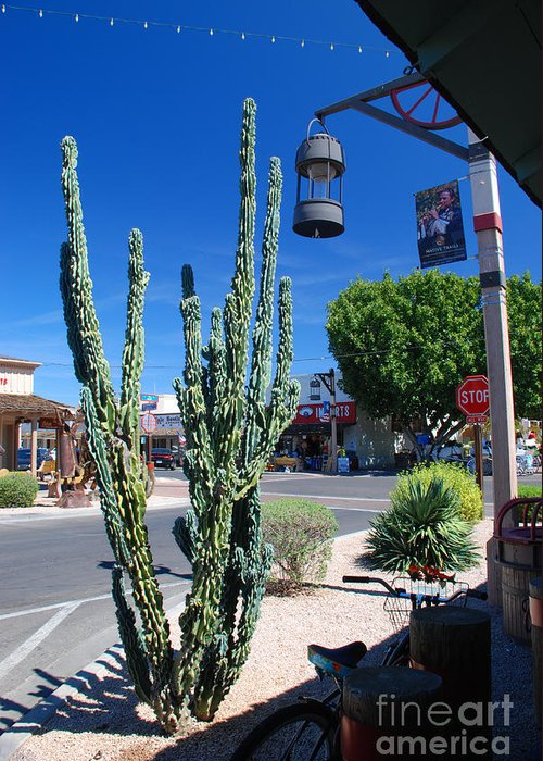 Cactus Old Town Scottsdale Arizona Greeting Card featuring the photograph Old Town Cactus by Richard Gibb