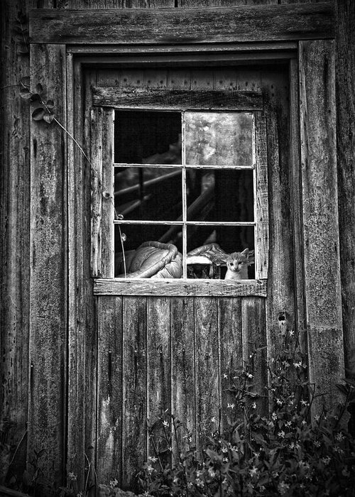 White Greeting Card featuring the photograph Old Window by Garry Gay