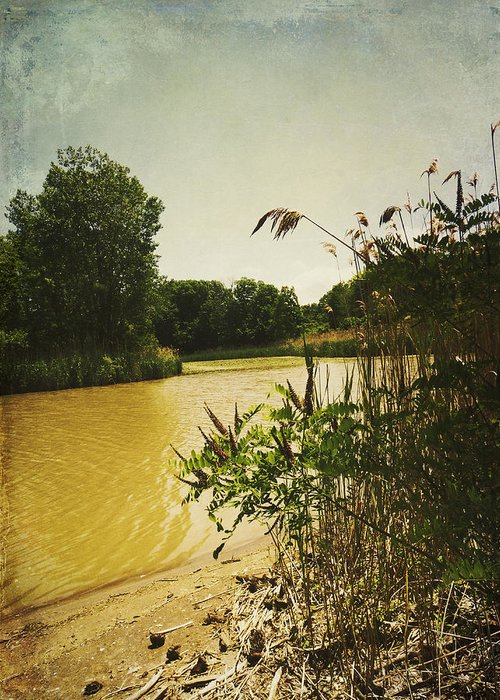 Old Woman Creek Greeting Card featuring the photograph Old Woman Creek by Shawna Rowe