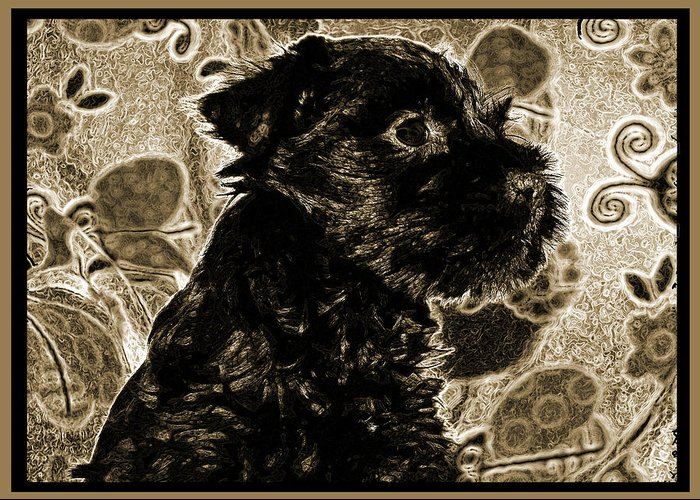 Schnauzer Greeting Card featuring the photograph Olde World Canine by Brian Graybill