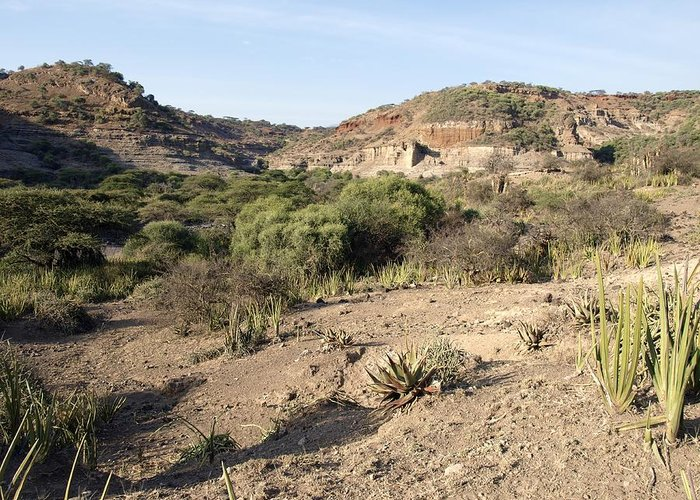 Plant Greeting Card featuring the photograph Olduvai Gorge Landscape, Tanzania by Science Photo Library