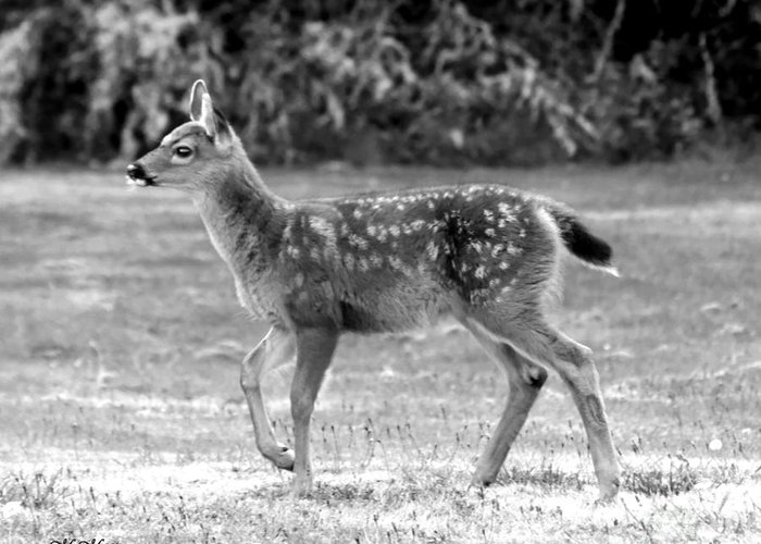 Deer Greeting Card featuring the photograph On Alert by Tap On Photo
