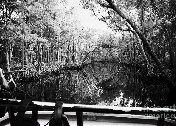 Airboat Greeting Card featuring the photograph On Board An Airboat Ride Through A Mangrove Jungle In Everglades City Florida Everglades Usa by Joe Fox