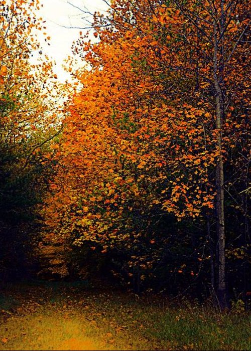 Autumn Greeting Card featuring the photograph On Jan's Farm by Julie Dant