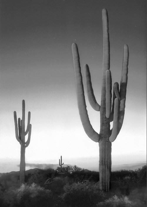 Arizona Landscape Greeting Card featuring the photograph On The Border by Mike McGlothlen