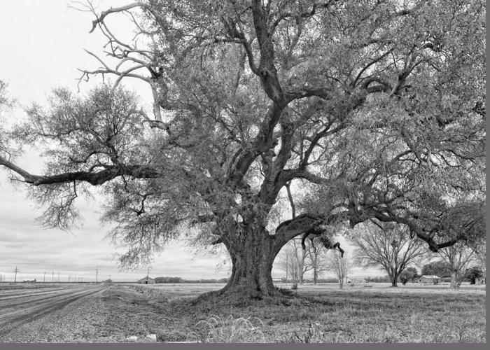 Delta Greeting Card featuring the photograph On The Delta Monochrome by Steve Harrington
