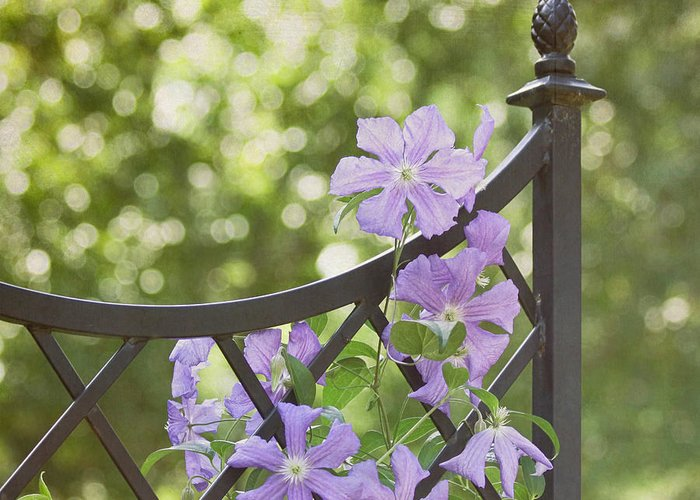 Purple Flower Greeting Card featuring the photograph On The Fence by Kim Hojnacki