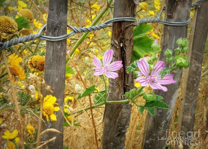Fence Greeting Card featuring the photograph On The Fence by Lainie Wrightson