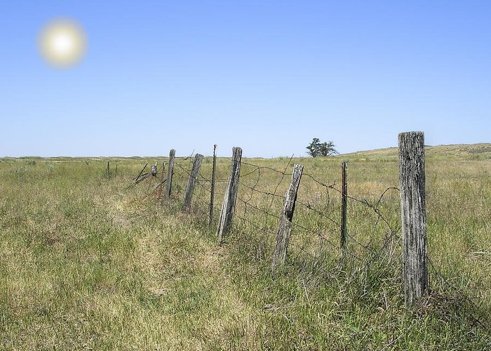 Prairie Greeting Card featuring the photograph On The Range by Daniel Hagerman